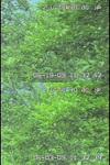 Bt20090619a_3